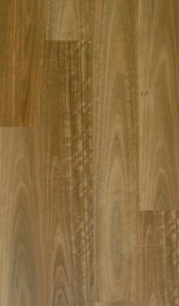 Spotted Gum 006